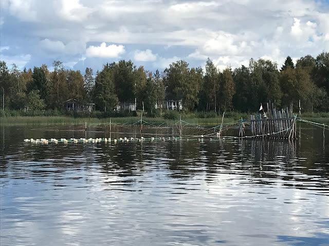 Puinen pinnan yläpuolelle ulottuva kalanpyydys joessa