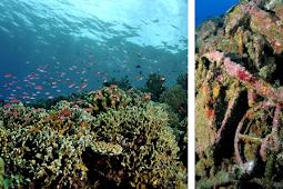 Objek Wisata Dan Spot Diving Di Pulau Morotai
