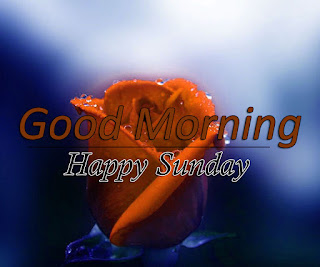 New Good Morning 4k Full HD Images Download For Daily%2B36