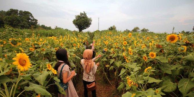 Enam Taman Bunga Terindah Di Indonesia Tak Kalah dari Kekeunhofnya Belanda