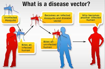 image result for Common vector borne diseases