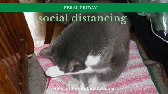 Feral Friday—Social Distancing