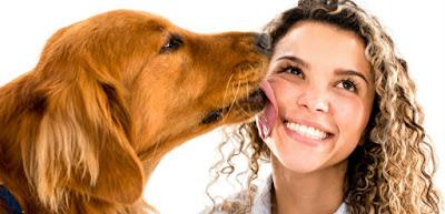 ¿Perros porque lamen caras?