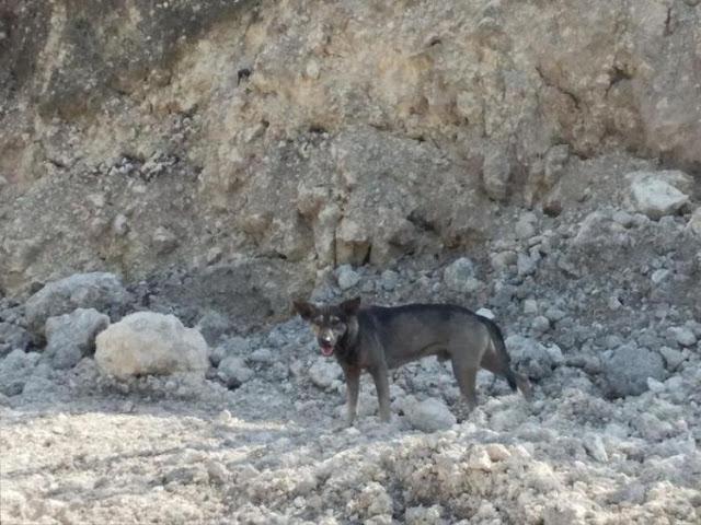Чтобы спасти младенца, пес привел незнакомца в горы