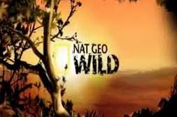 NatGeo Wild Germany - Astra Frequency