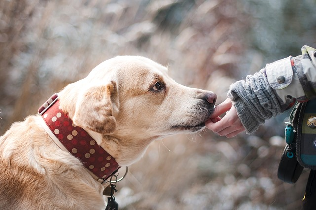 12 Things Your Dog Doesn't Like About You