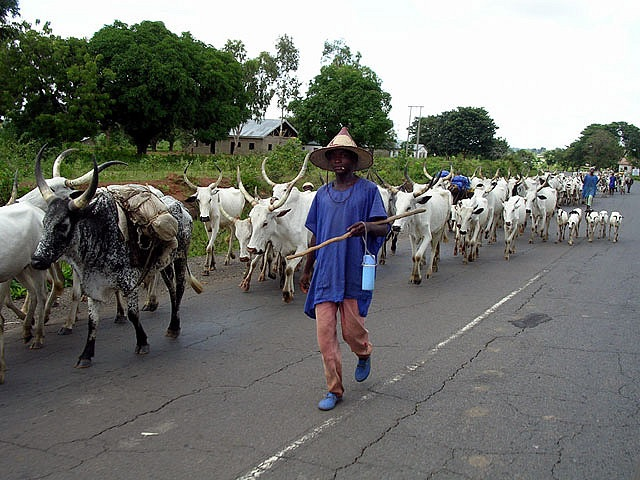 South-East traditional rulers favour cattle ranches to curb farmers/herdsmen clashes