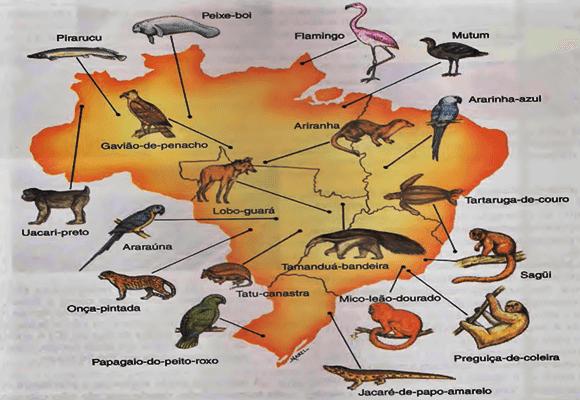 Fauna-Mapa-nossa-fauna