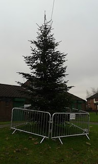Christmas tree in Adswood