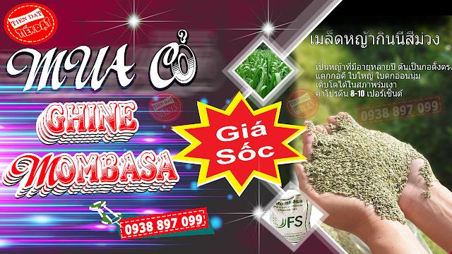 Địa chỉ mua hạt giống cỏ mombasa ghine