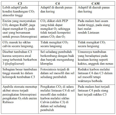 Perbedaan Laju Fotosintesis beberapa jenis Tumbuhan