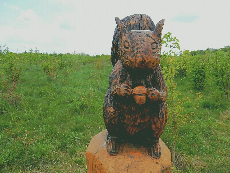heartwood forest st albans hertfordshire