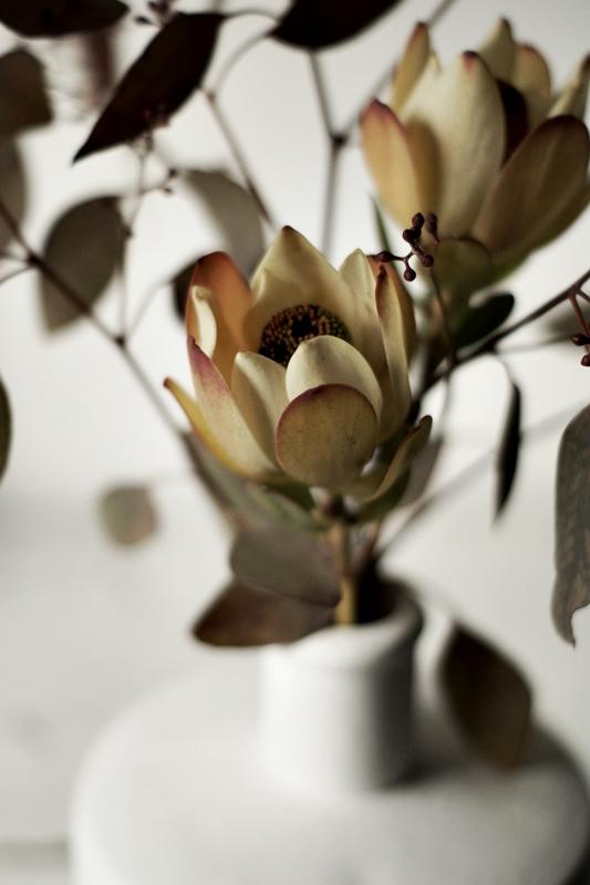 Blog + Fotografie by it's me! - Eukalyptus + Protea aus der Nähe