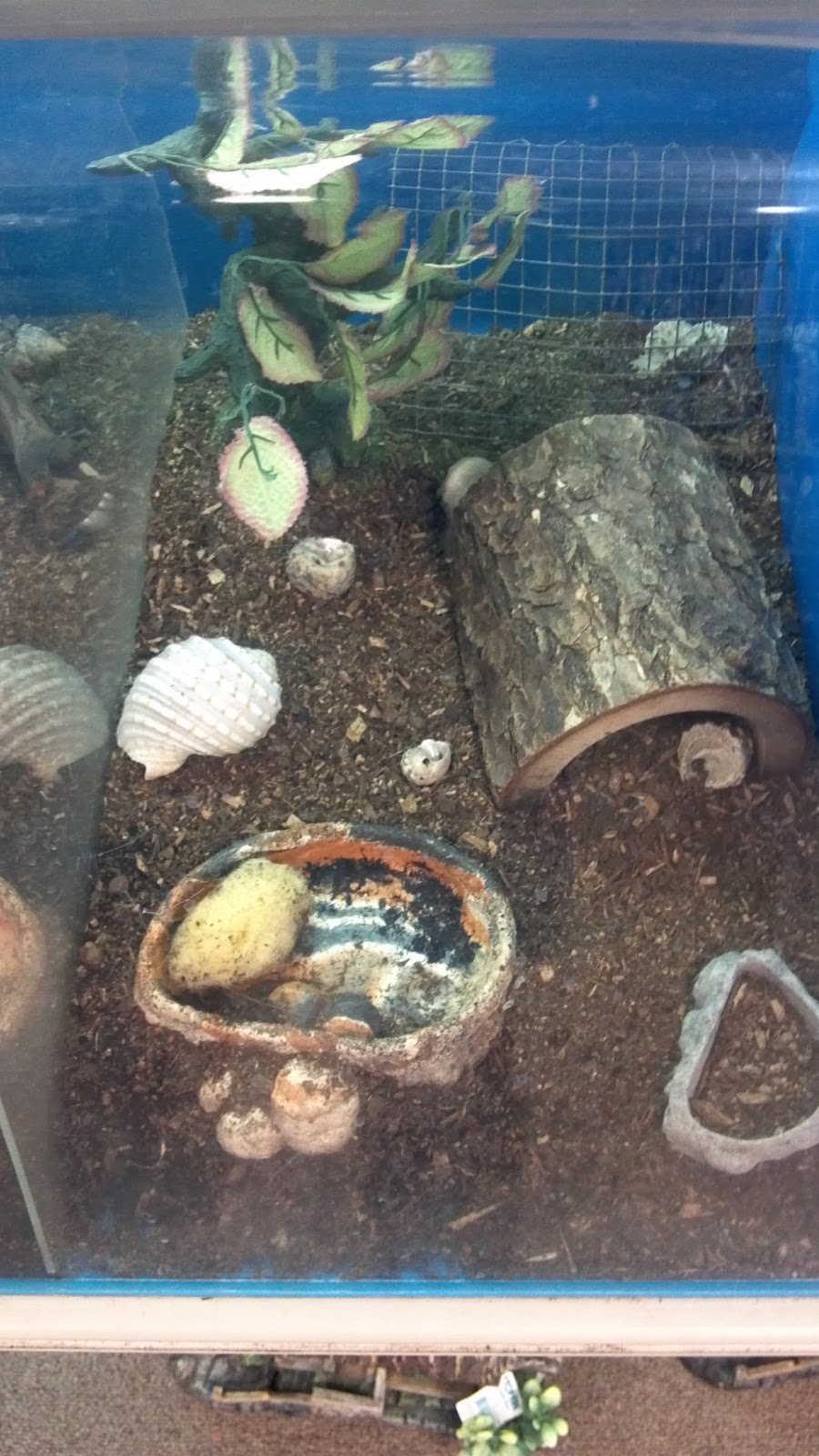 Best Hermit Crab Habitat Pictures to Pin on Pinterest ...