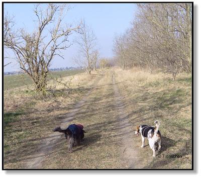 Emma und Lotte, zwei Hunde unterwegs