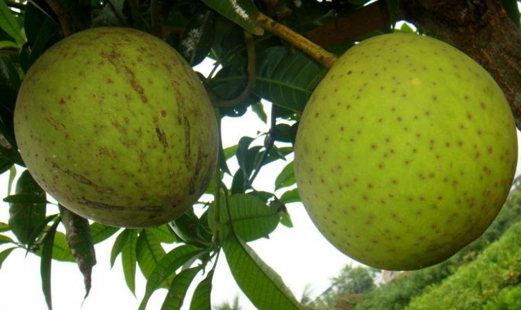 5 Manfaat Buah Limus untuk Kesehatan Tubuh