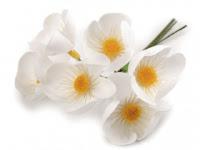 https://scrapkowo.pl/shop,kwiaty-materialowe-6szt-biale,8698.html