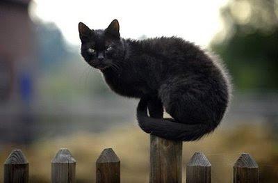 Roadside Mystic Mystic Cats