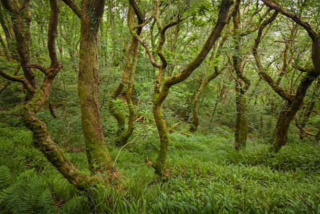 Tangle of tree in Culbone Woodland in Exmoor National Park by Martyn Ferry Photography