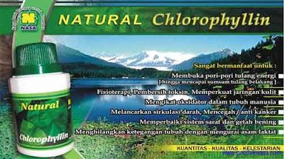 chlorophyllin menjaga kesehatan serta pembuang racun dalam tubuh
