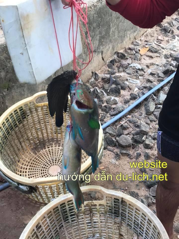 Hình ảnh hải sản Phú Quốc