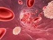 Das Innere eines Blutgefäßes mit Erythrozyten