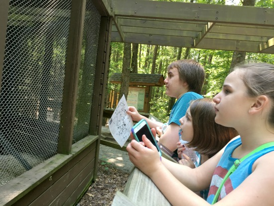 Looking at birds in the Raptor Center