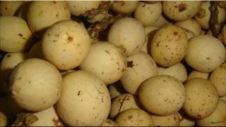 gambar buah kokosan