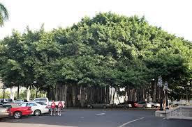 The Banyan tree,banyan tree mayakoba, banyan tree tai o, banyan tree maui, banyan tree vabbinfaru, banyan tree bangkok, banyan tree hawaii, banyan tree phuket, banyan tree florida, banyan tree apartments, banyan tree acapulco, banyan tree at memorial, banyan tree apartments san antonio tx, banyan tree age, banyan tree art, banyan tree athens ga, banyan tree asset management a banyan tree paragraph, a banyan tree autobiography, a banyan tree story, a banyan tree sketch a banyan tree in telugu, the banyan tree class 6, the banyan tree tai o, the banyan tree school, banyan tree bintan, banyan tree bonsai, banyan tree billings, banyan tree bali, banyan tree bahamas, banyan tree beach resort, banyan tree buddha, b garden banyan tree, banyan tree b, banyan tree cafe, banyan tree cabo marques, banyan tree cancun, banyan tree cleveland, banyan tree cafe hong kong, banyan tree counseling, banyan tree cabo, banyan tree china banyan tree dental, banyan tree definition, banyan tree drive, banyan tree drawing, banyan tree divers, banyan tree delivery, banyan tree drive hilo, banyan tree downtown fort myers, banyan tree 3d, ach d- bd-banyan tree, banyan tree d, 3d model banyan tree, banyan tree educational services, banyan tree edison, banyan tree en espanol, banyan tree educational services jobs, banyan tree essentials, banyan tree education, banyan tree essential oil, banyan tree events, banyan tree e gift card, o que e banyan tree, banyan tree for sale, banyan tree fruit, banyan tree fort myers, banyan tree forest, banyan tree facts, banyan tree foundations academy, banyan tree for sale florida, banyan tree golf course, banyan tree growth rate, banyan tree grill, banyan tree growing, banyan tree guam, banyan tree group, banyan tree gifts, banyan tree hong kong, banyan tree hotel, banyan tree hotel bangkok, banyan tree honolulu, banyan tree hilo, banyan tree hotel mexico, banyan tree hours, banyan tree in maui, banyan tree images, banyan tree india, banyan tree in hawaii banyan
