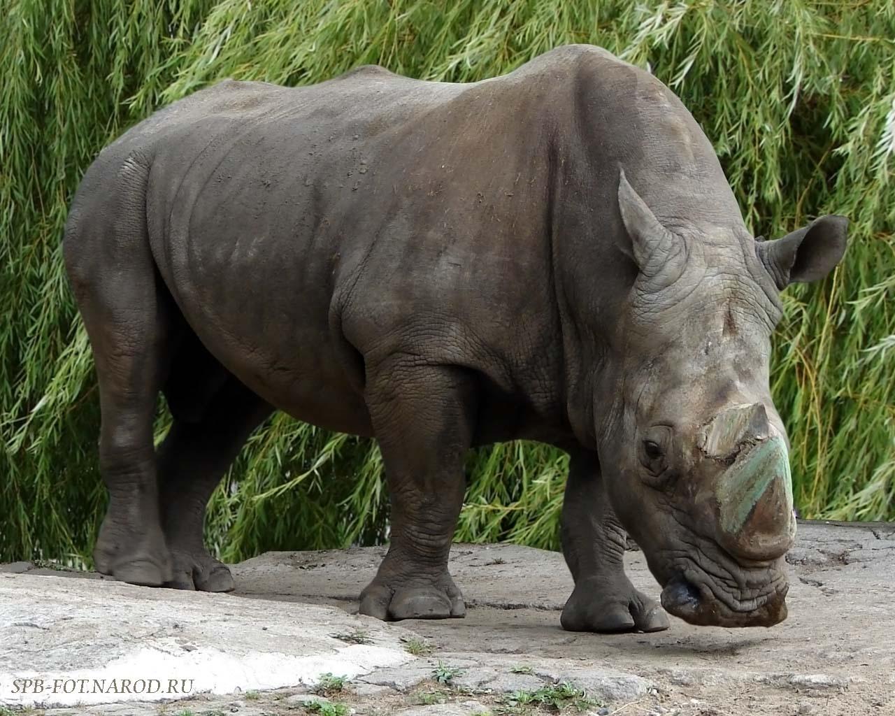 Love U Wallpapers: rhinoceros backgrounds