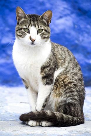 سبب مواء القطط المستمر