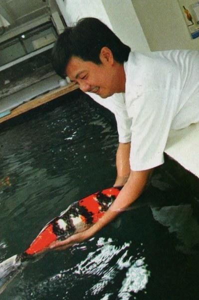 Pehobiis Raup Untung Jutaan Perbulan Dari Budidaya Ikan Koi