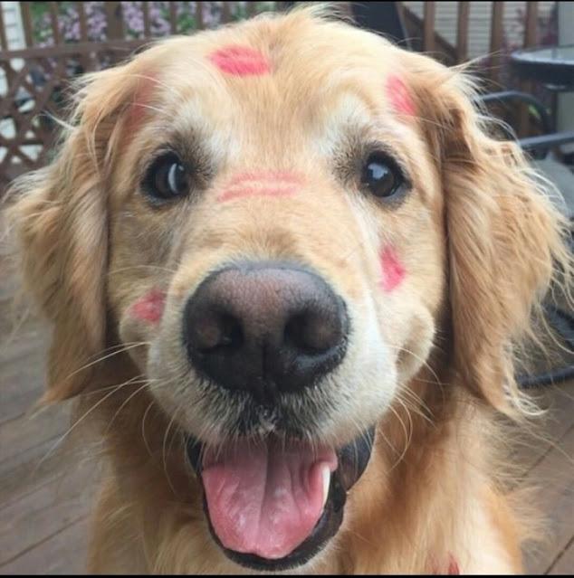 Why Do I Love My Dog So Much?