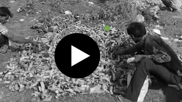 Migrants Pick Bananas Trashed Near Delhi Cremation Ground