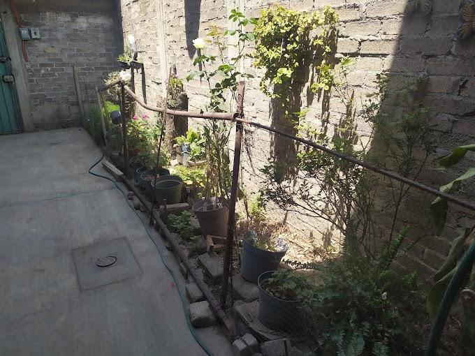 Remodelación de la jardinera