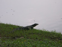 Oriental Garden Lizard & Water Monitor in Lumpini Park, Bangkok, Thailand; 11/10/2012
