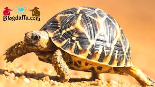 Cara merawat kura-kura dengan mempelajari karakteristik nya