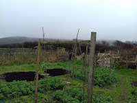 St Ives Cornwall Allotment - Winter