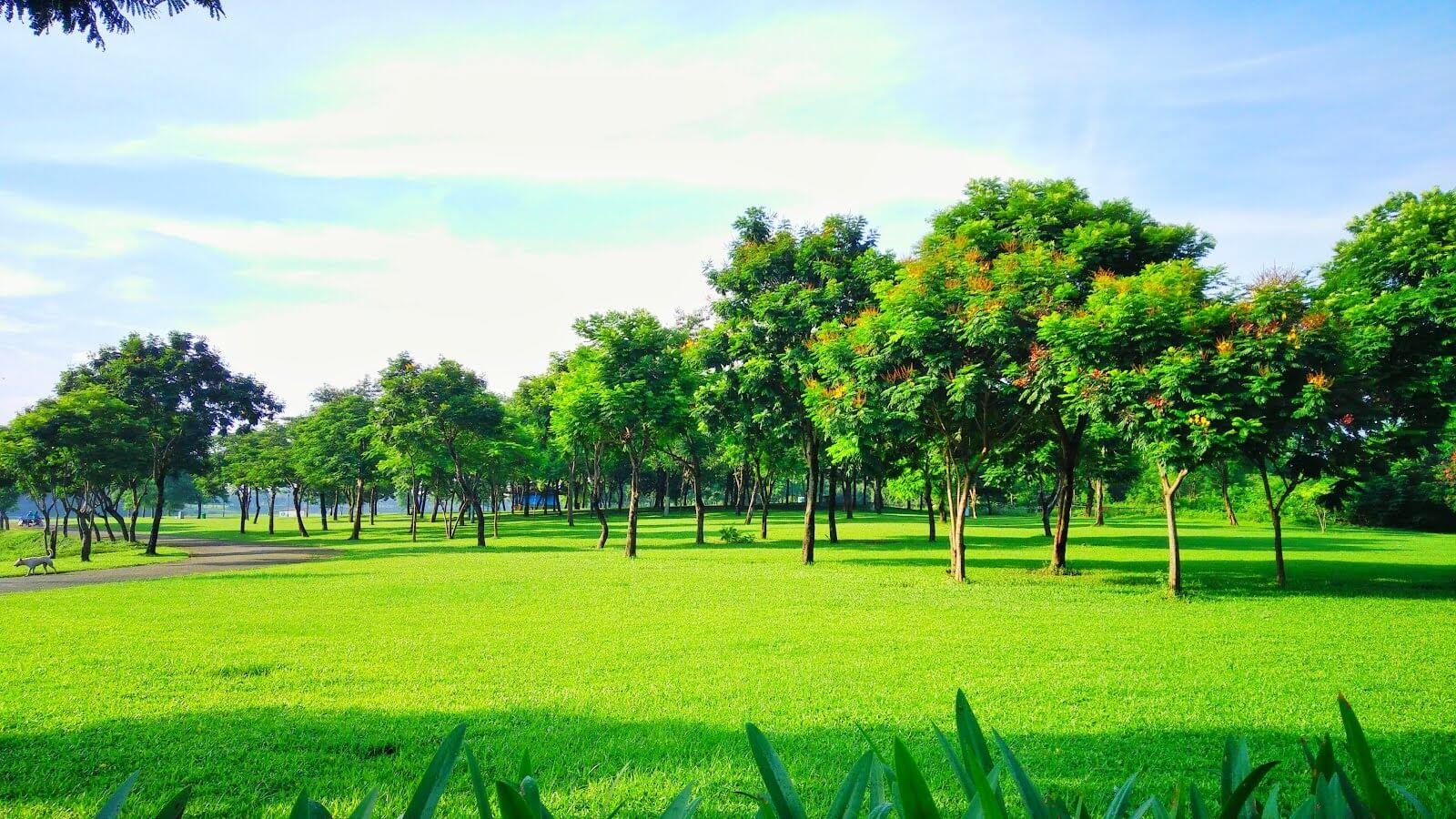 Có rất nhiều cây xanh tại Eurowindow Yên Sở.