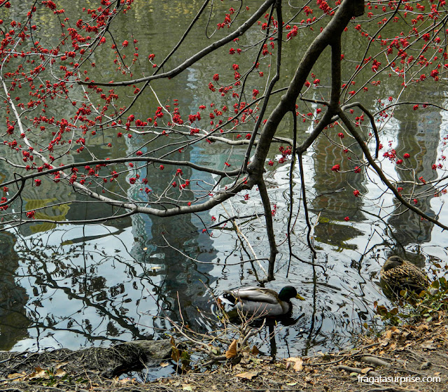 The Pond, a lagoa do Central Park, Nova York
