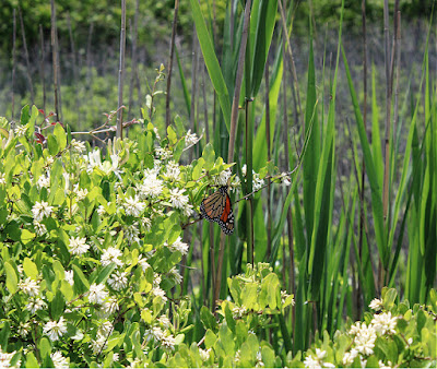 The Cape May Nature Trail in New Jersey