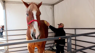 World's tallest horse, Big Jake died at the  age of 20 in Wisconsin