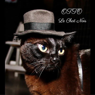 black cats Burmese cats fedora hat