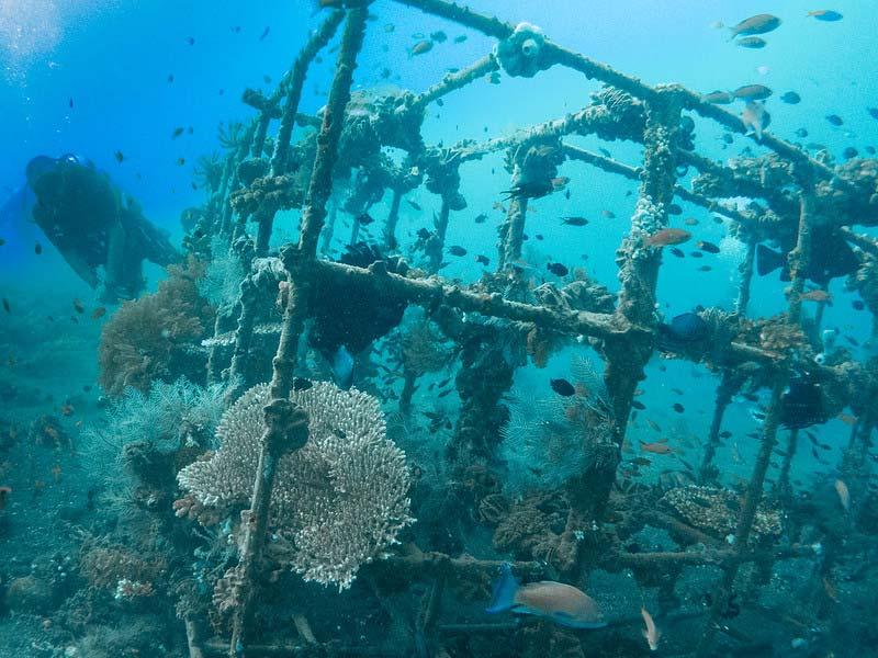 Diving di Pantai Tulamben Karangasem Bali