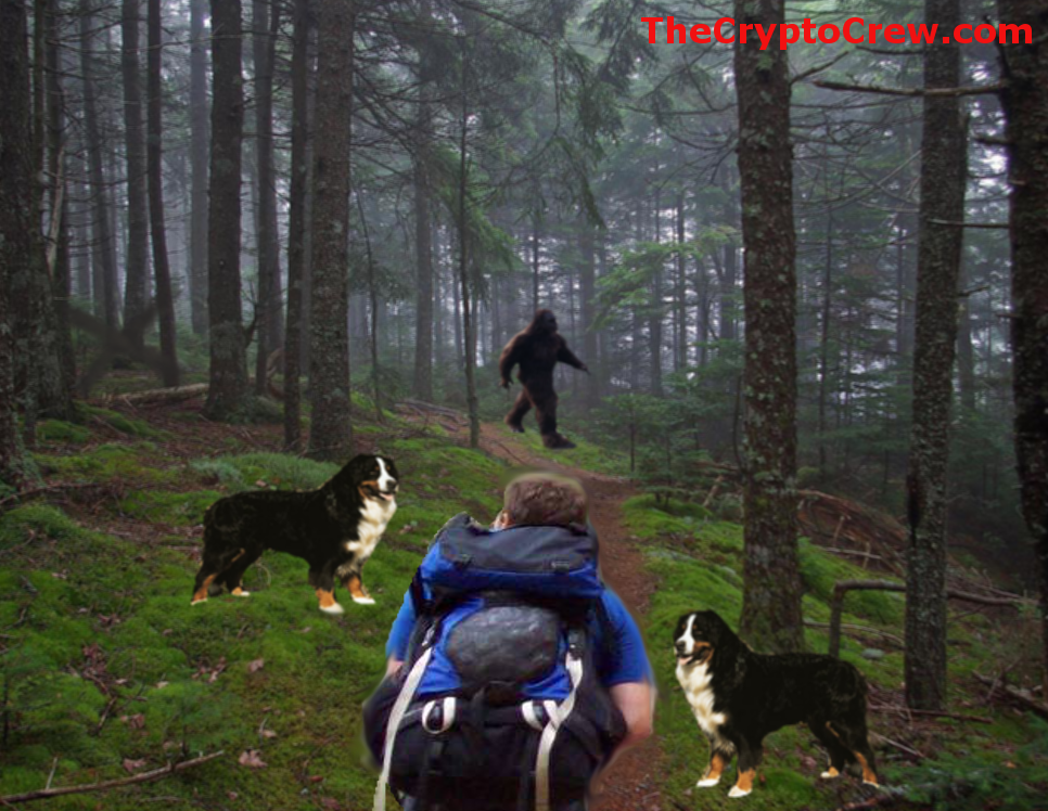 Hiker Sees a Bigfoot