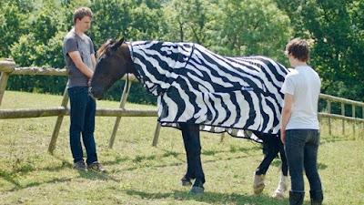 Una forma de evitar los picotazos imitando a las cebras
