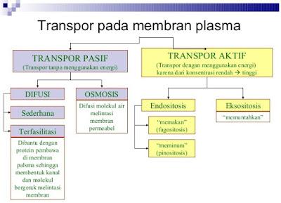http://www.sigerpendidikan.com/2016/10/perbandingan-transfor-zat-pada-membran.html