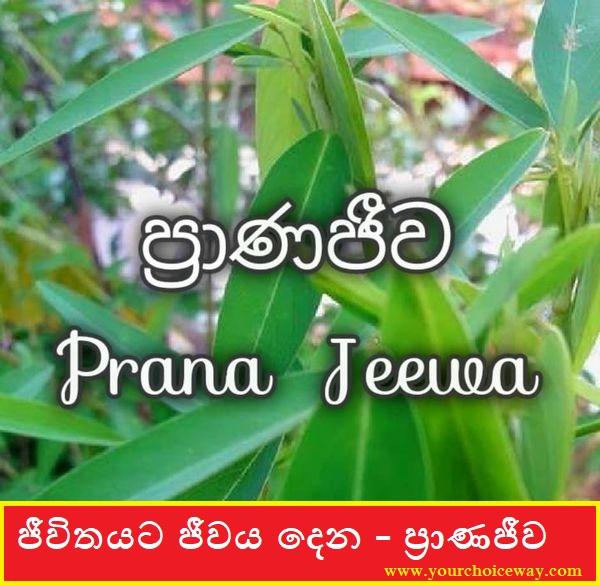ජීවිතයට ජීවය දෙන - ප්රාණජීව ( Pranajeewa [ Panajiwa ] ) - Your Choice Way