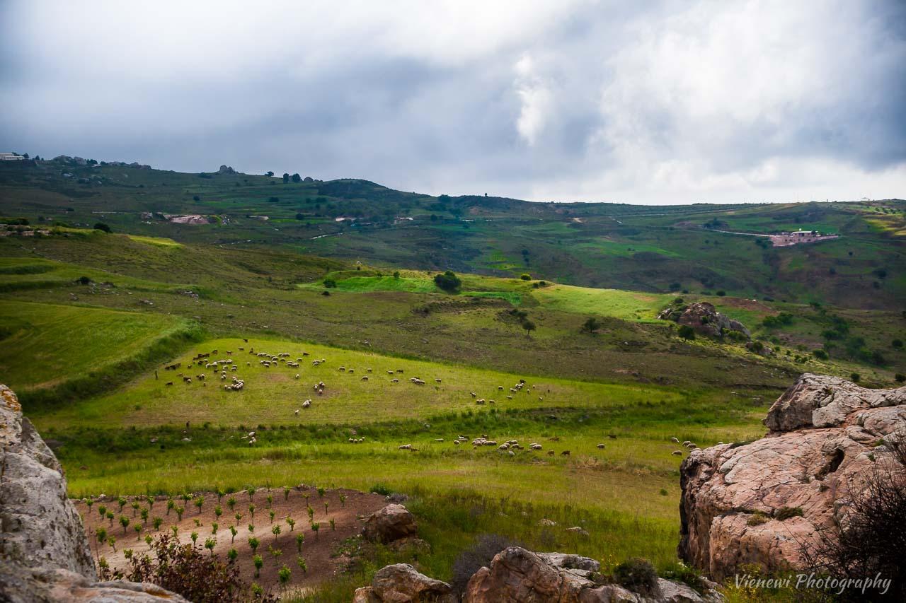 Wiosenne zielone pola z pasącymi się stadami owiec w poblizu skał wspinaczkowych w Drussia z dramatycznym, zachmurzonym niebem. Zdjęcie zrobione z samej góry.