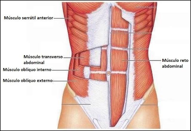 O básico do Sistema Muscular